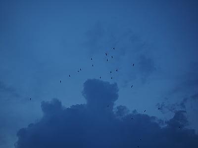eixam, ramat d'ocells, aus migratòries, thundercloud, núvol, Parcialment ennuvolat, núvols fosques
