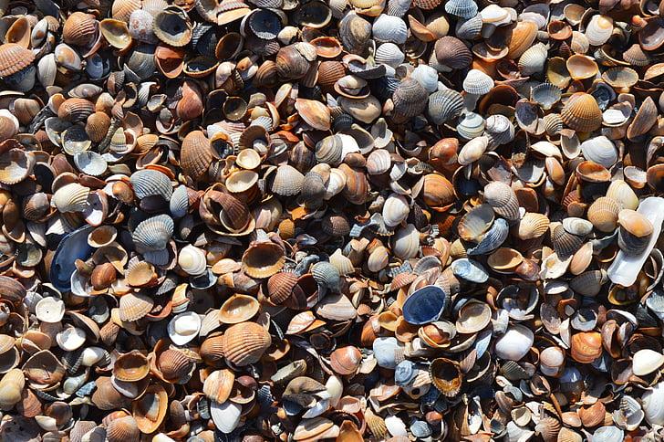Musclos, platja, Costa, natura, tancar, closca
