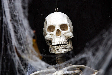 halloween, celebration, party, skull, bones, human Skull, horror