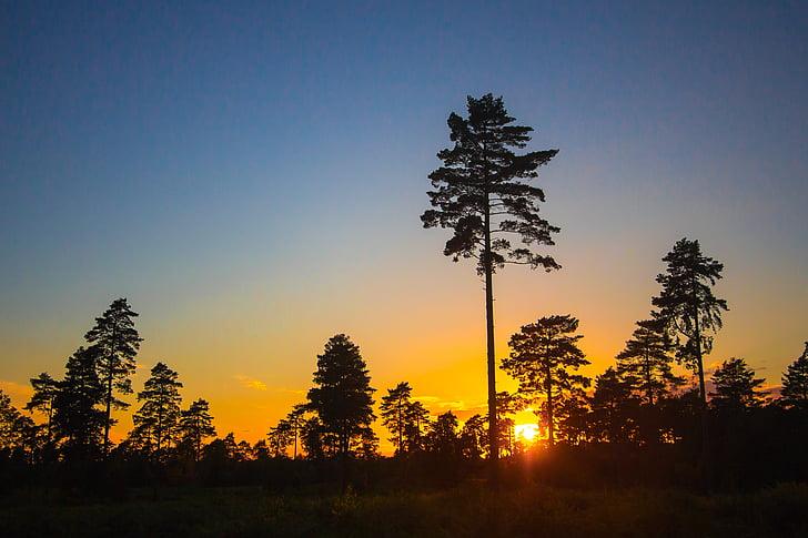 solnedgång, skogen, träd, silhuetter, Sky, naturen, träd