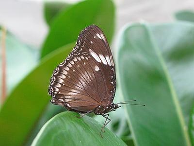 perhonen, värikäs, Mainaun, Butterfly house, silmä