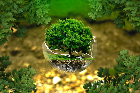 protezione dell'ambiente, conservazione della natura, ecologia, Eco, Bio, sfera di vetro, foresta