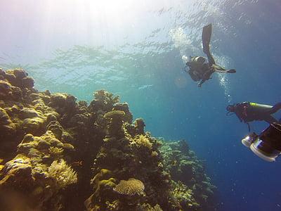 Риф, Дайвинг, Палау, мне?, воды, океан, Подводный