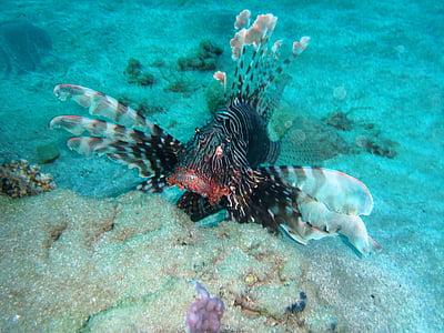 fish, animal, water, animals, pet, under-water, diving