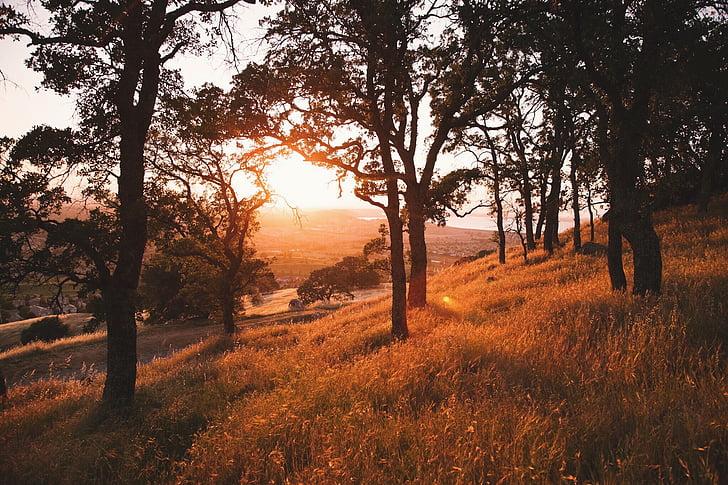 solljus, solsken, solnedgång, soluppgång, gräs, naturen, landskap