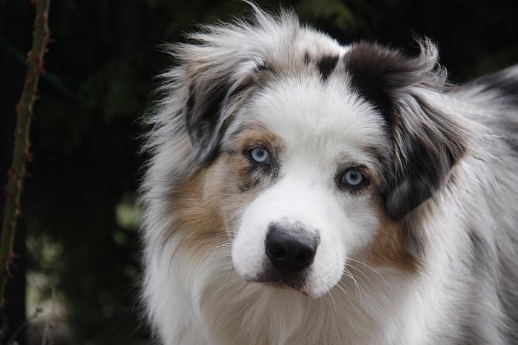 dog look, dog, dog breed