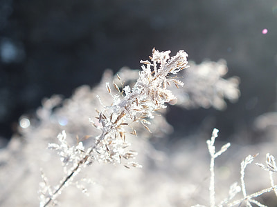 winter, frost, ice
