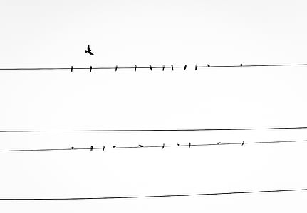 ramats, ocell, part superior, cable, filferro, ocells, observació d'aus