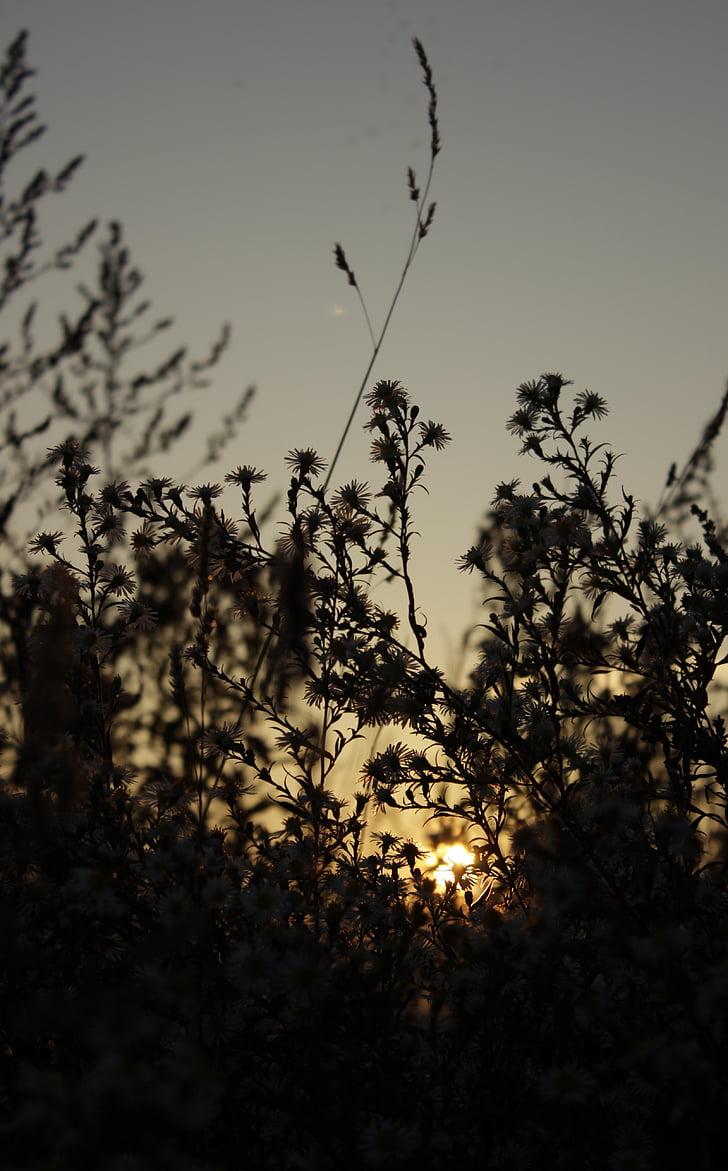 herba, natura, sol, oest, tardor, flor, planta