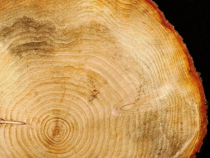 ξύλο, αρχείο καταγραφής, ετήσιους δακτυλίους, δομή του ξύλου, δομή, δέντρο, ξύλο - υλικό
