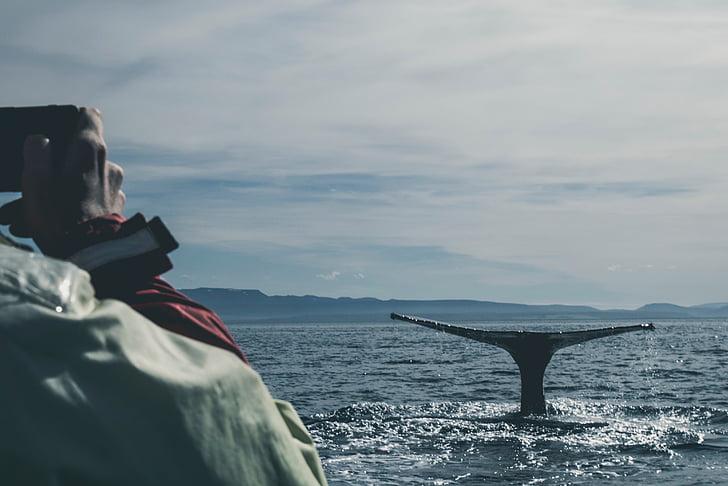 Whale, simning, Ocean, blå, Sky, personer, mannen