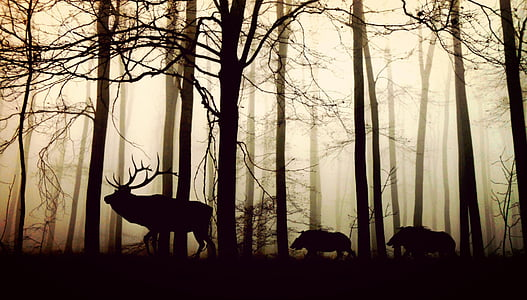 forest, fog, hirsch, wild boars, nature, animals, trees