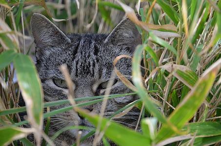cat, bamboo, animal, cat face, cat's eyes, cute cat, domestic Cat