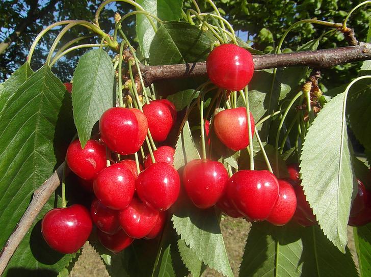 ķirši, augļi, sarkana, vecāki, ēst veselīgu, svaigu