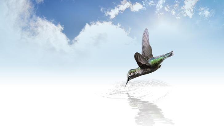 kolibris, paukštis, skristi, sparnas, plazdėjimas, debesys, dangus
