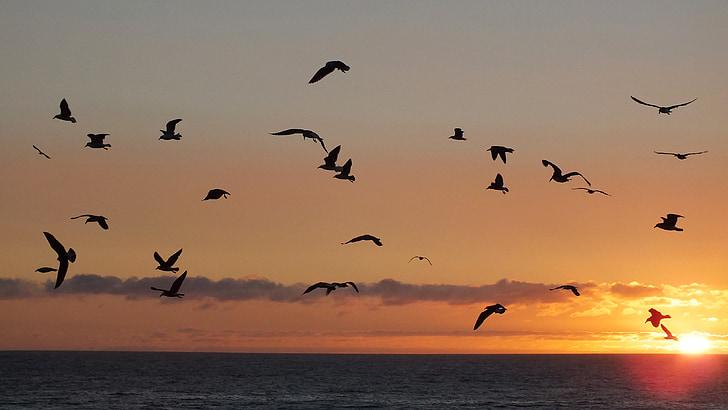 птици, залез, море, небе, хоризонт, плаж, природата