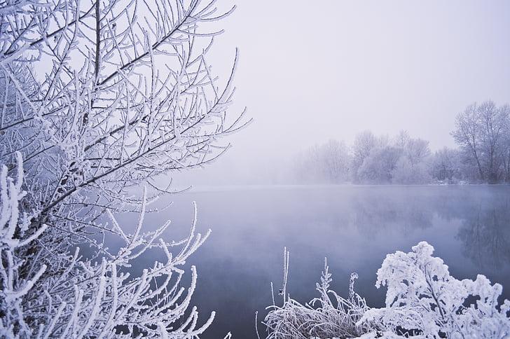 winter, water, trees, snow, vegetation, frost, fog