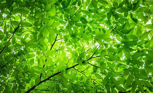 fusta, les fulles, branca, fulla, textura, patró, natura