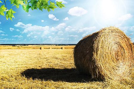 pole, pšenica, poľnohospodárstvo, obilniny, kukuričnom poli, EPI, vidieka