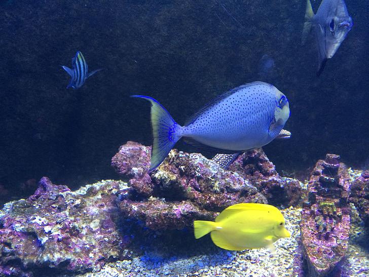 a vízben, hal, tengeri hal