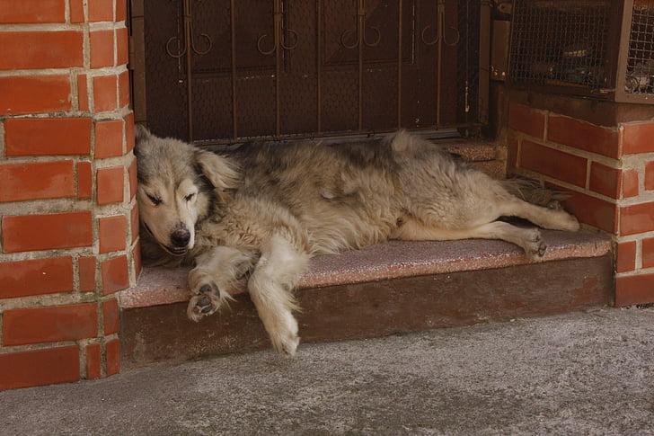 dog, lying, laziness, dog lying, tiredness
