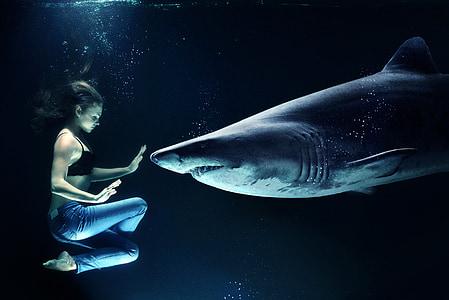 kvinna, Hai, vithaj, Underwater, havet, hajattack, mänsklig värd