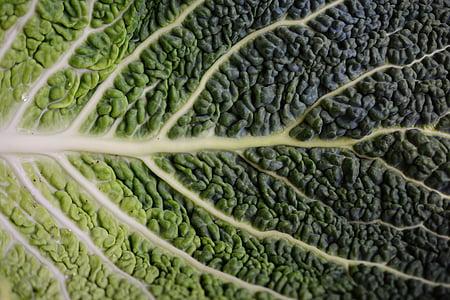fulla de col, Savoia, fulla de cabdell de Savoia, estructura, hortalisses Brassica, paradeta, verdures