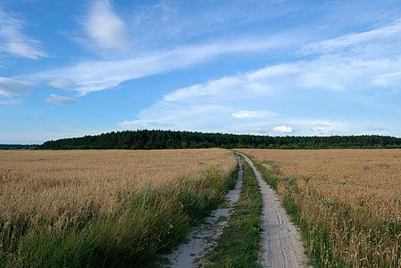 pole, drogi, lasu, Natura, niebo, Latem, krajobraz