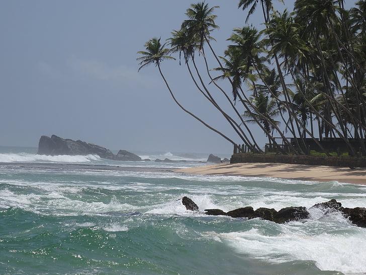 Beach, Sri lanka, mereäär, kookospähkli, troopikas, Sea, loodus