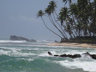 Beach, Srí lanka, morské pobrežie, Kokos, trópy, more, Príroda