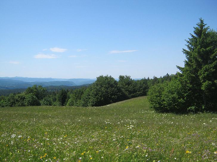 mountain meadow, meadow, summer meadow, summer, flowers, mountain flowers, sky