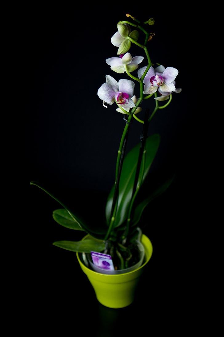 kvety, rastlín, Záhrada, Príroda, vôňa leta, Lúčne kvety, biela