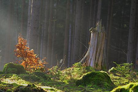 ป่าเวทมนตร์, ป่า, นางฟ้าป่า, ลึกลับ, มอส, สีเขียว, ธรรมชาติ