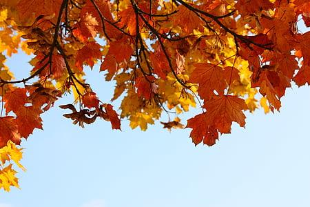 tardor, fulles, brillant, herbstimpression, colors, temps de l'any, natura