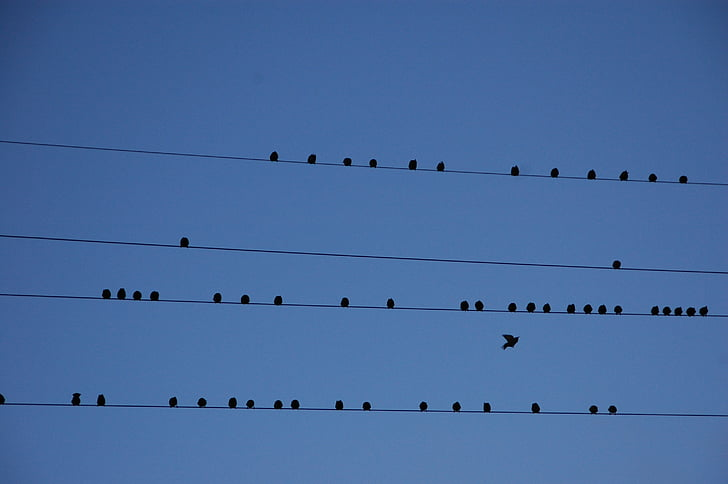 Тел, птици, миграция, дял, синьо, птица, небе