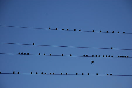drutu, ptaki, migracji, partycji, niebieski, ptak, niebo