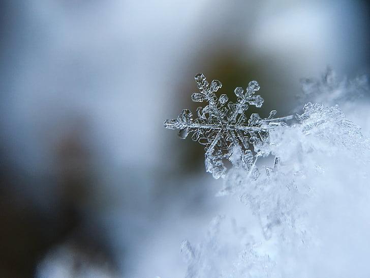 fulg de Nea, zăpadă, cristal, cristale de zăpadă, rece, macro, iarna