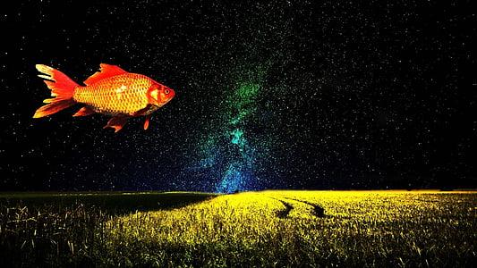 goldfish, fantasy, imagination, fish, surreal, sky, dream