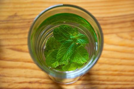 menta, verd, fulla, vidre, llimona, líquid, Medicina