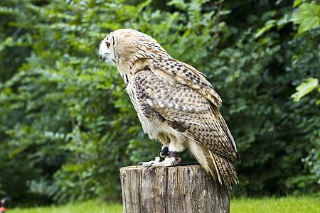 bird of prey, owl, bird, zoo, beak