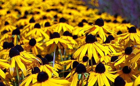 lilled, p müts, lill, kollane, Bloom, Sulgege, Aed