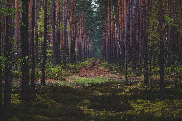verd, arbres, planta, natura, bosc, l'aire lliure, arbre