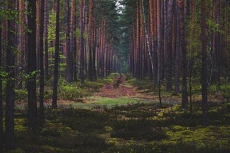 Zelená, stromy, rastlín, Príroda, Forest, Vonkajší, strom