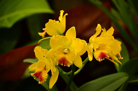 Free photo tropical flower yellow tropical flower exotic hippopx 4928x3264 orchids cymbidiums flowers exotic tropical yellow atlanta mightylinksfo