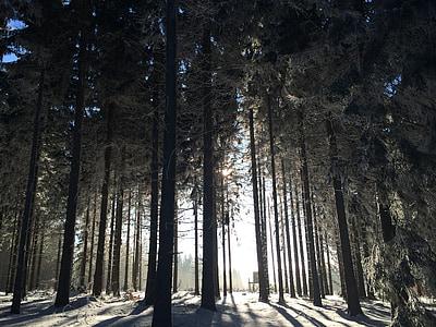 bosc d'hivern, neu, bosc, cobert de neu, hivernal