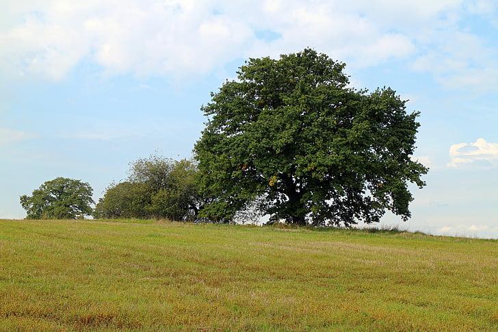 tree, individually, nature, sky, meadow, green