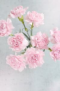 chiodi di garofano, fiori, rosa, garofano rosa, petali di, Mazzo del garofano, dall'alto