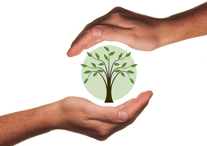 protegir, mans, Ecologia, protecció, arbre, planta, Bio