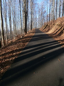 forest, nature, beech forest, light, shadow, path, tree