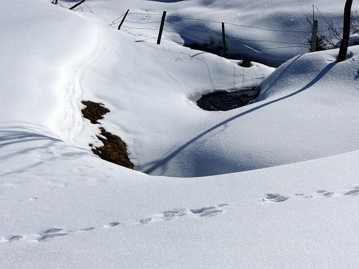 apretones de nieve, sombra, nevados, Blanco, invernal, cubierto de nieve, invierno
